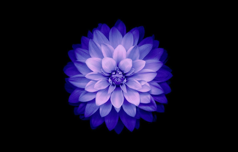 Photo wallpaper flower, background, petals, Blue, IOS 8