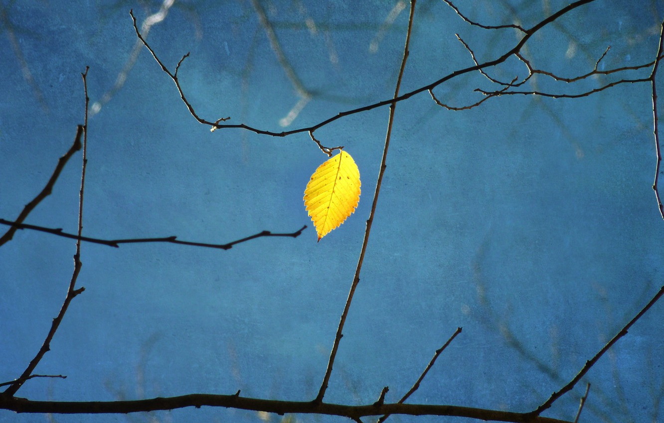 Photo wallpaper branches, yellow, sheet, tree, blue background