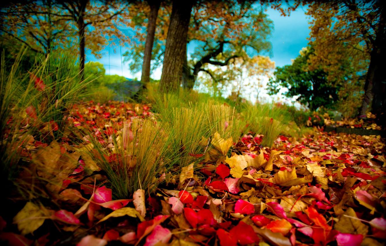 Photo wallpaper autumn, trees, nature, foliage