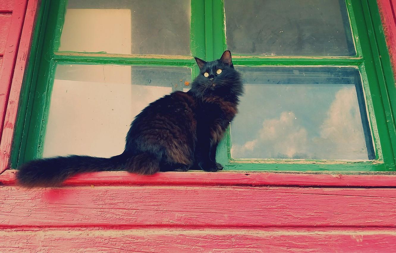Photo wallpaper cat, cat, look, Koshak, window, fluffy