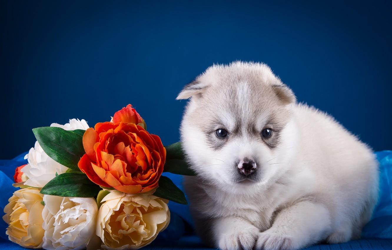 Photo wallpaper flowers, baby, puppy, husky