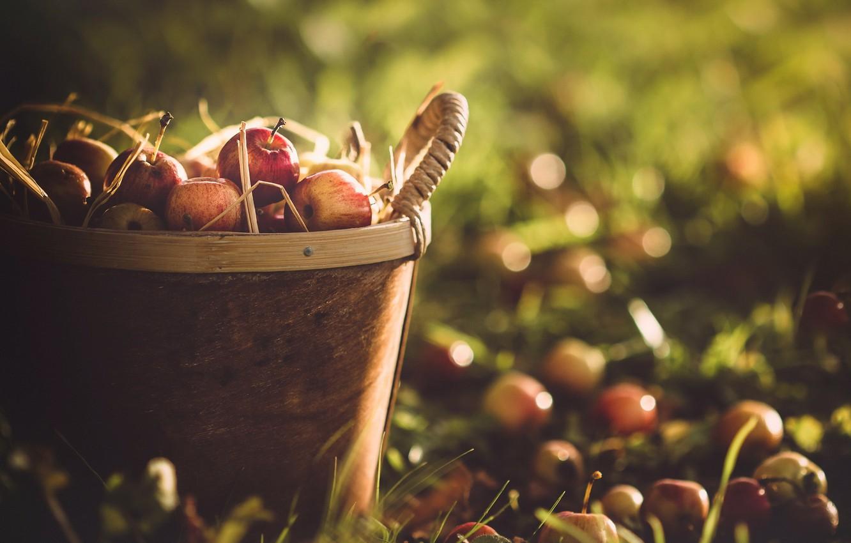 Photo wallpaper autumn, basket, apples