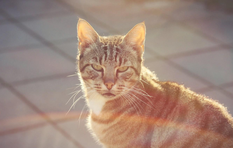 Photo wallpaper cat, look, street, wool