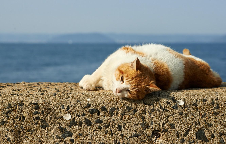 Photo wallpaper cat, stay, Koshak, lies
