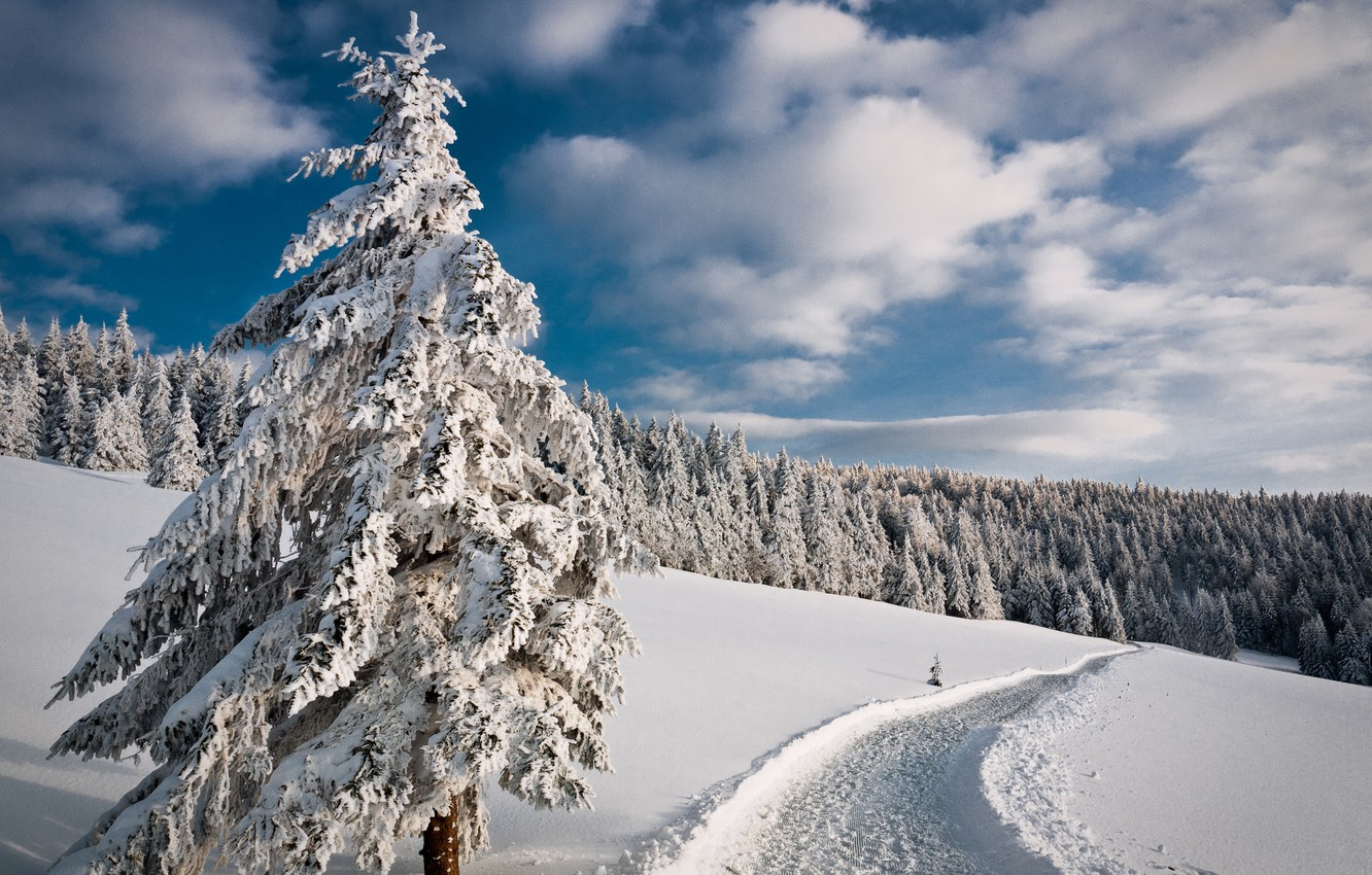 Photo wallpaper winter, road, forest, the sky, snow, trees, tree, spruce