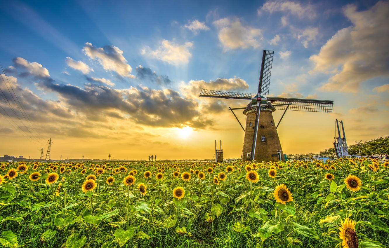 Photo wallpaper field, the sky, the sun, clouds, sunflower, space, mill