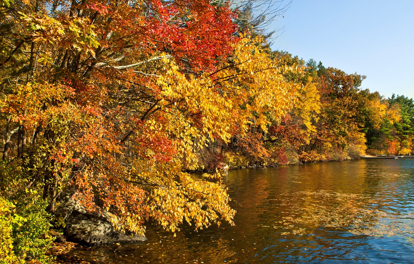 Photo wallpaper autumn, forest, leaves, the sun, trees, river, stones, yellow