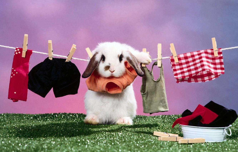 Photo wallpaper linen, Rabbit, dried