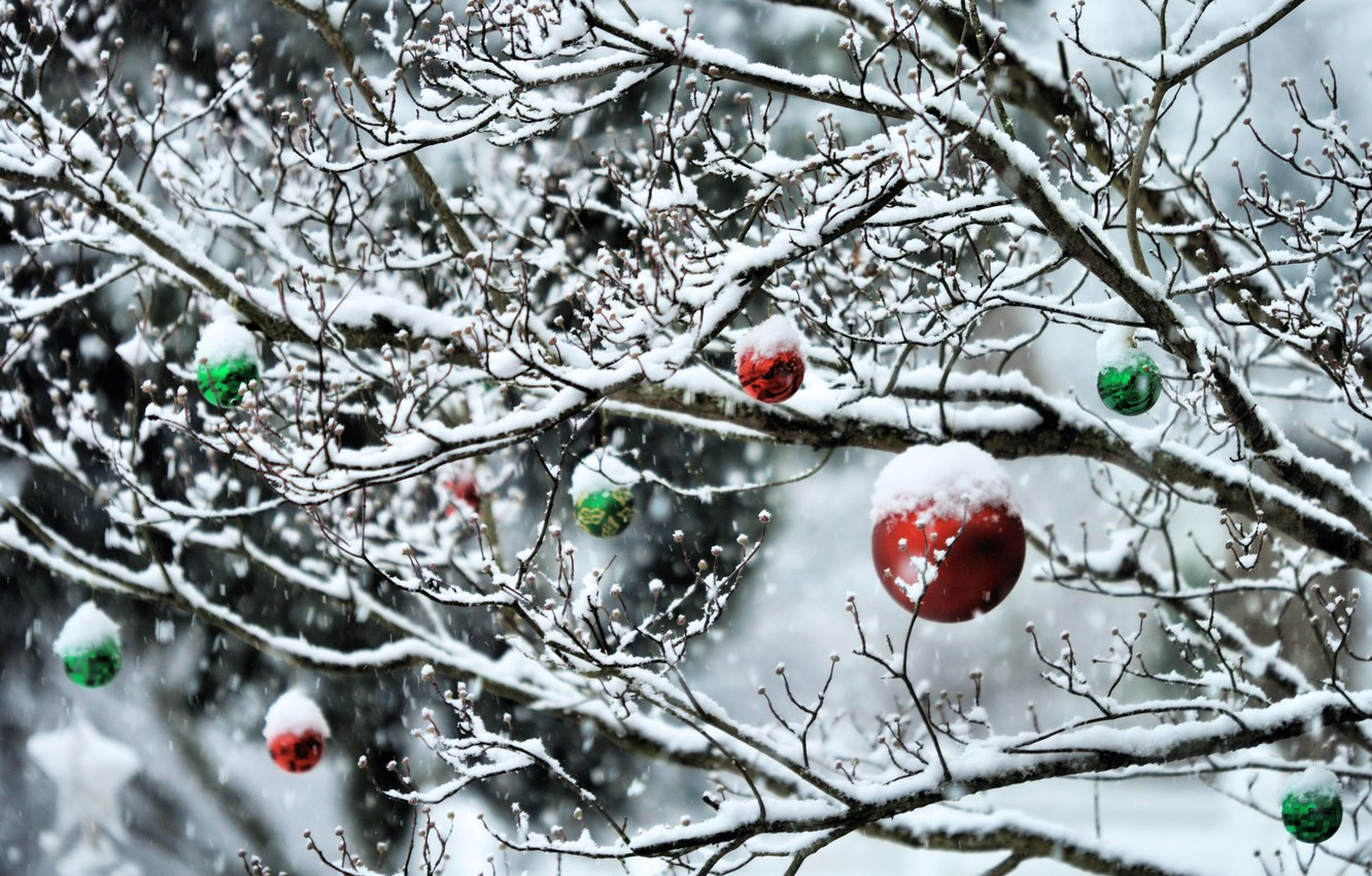 Photo wallpaper winter, forest, snow, trees, new year