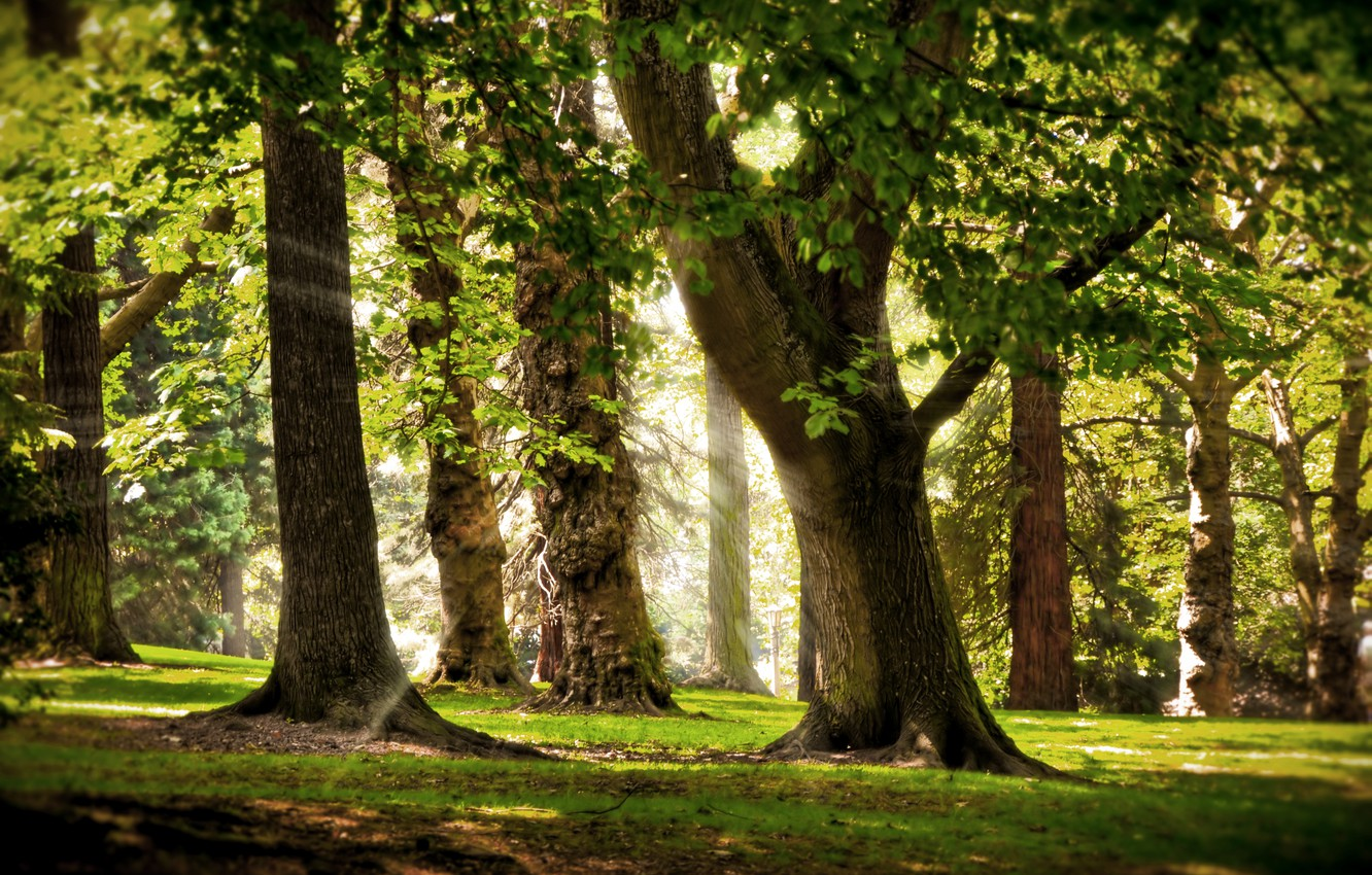 Photo wallpaper grass, the sun, trees, branches, ray, morning