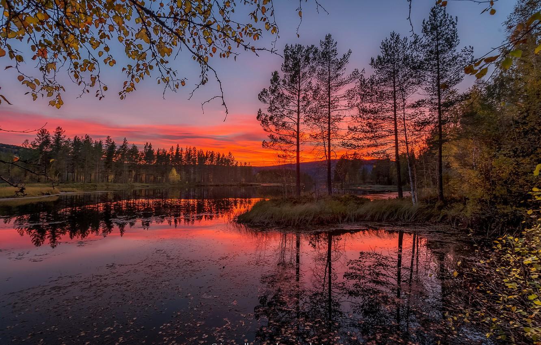 Photo wallpaper autumn, leaves, trees, sunset, branches, Norway, river, Jorn Allan Pedersen