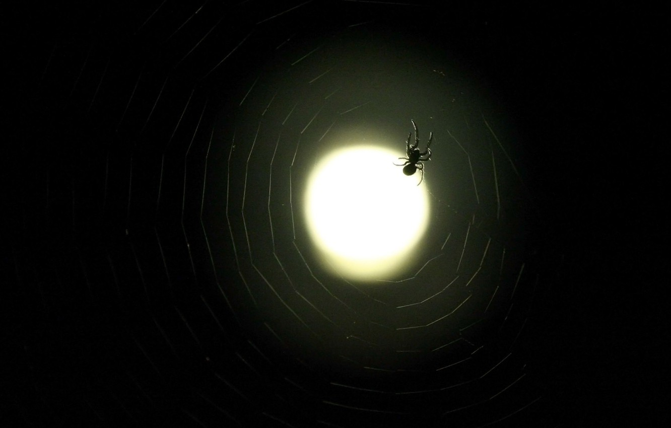 Photo wallpaper web, spider, The moon