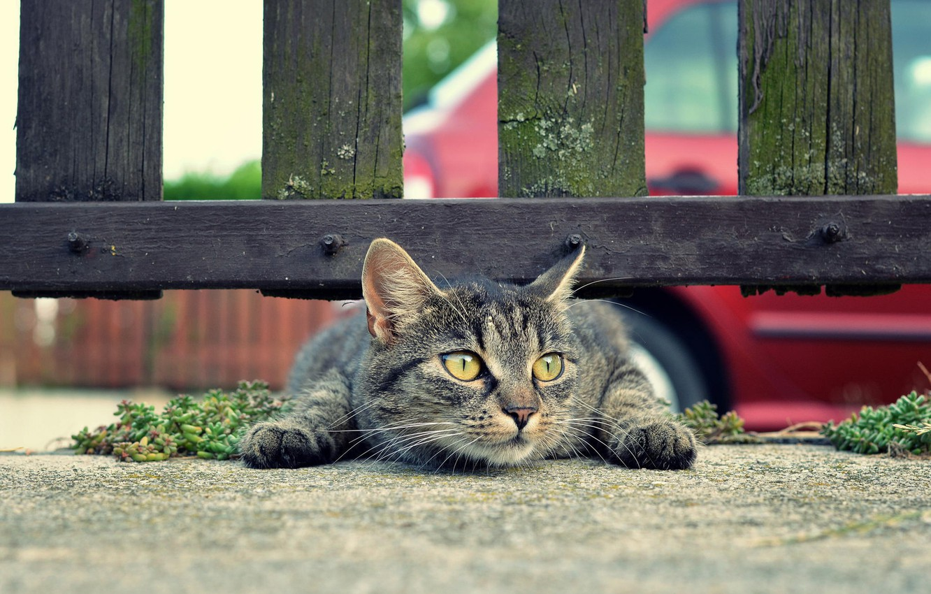 Photo wallpaper mustache, earth, the fence, Cat