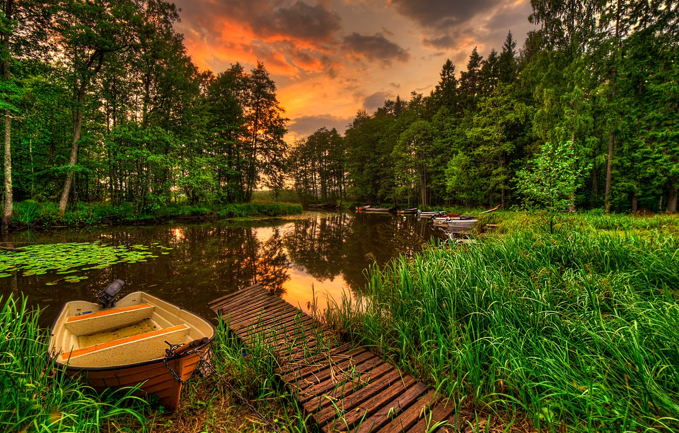 Photo wallpaper forest, the sky, grass, water, landscape, sunset, nature, lake, reflection, view, grass, forest, sky, landscape, …