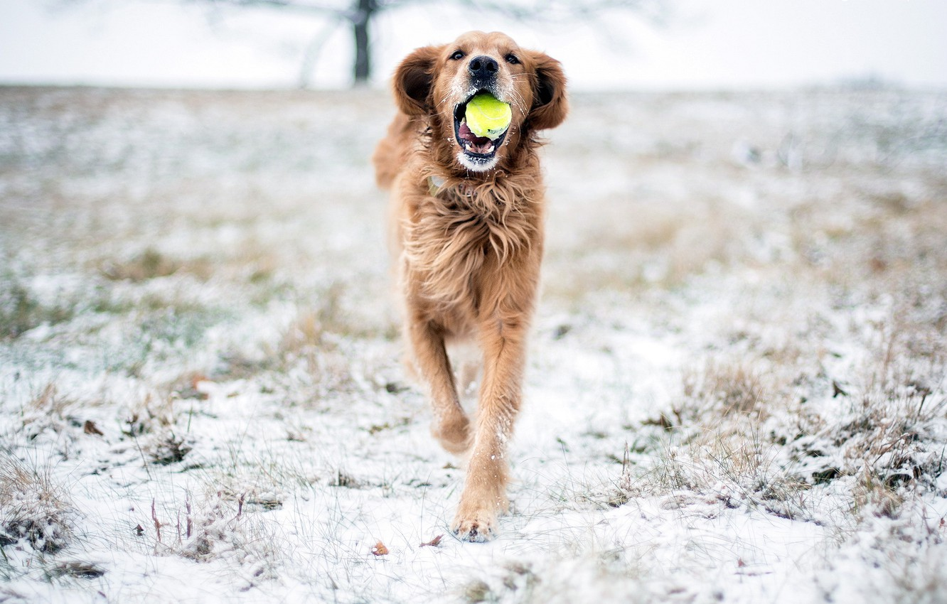 Photo wallpaper snow, the game, dog