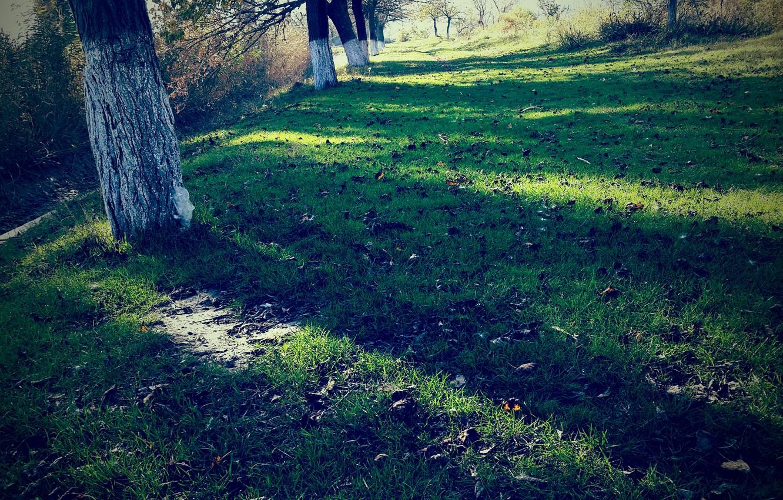 Photo wallpaper grass, trees, nature