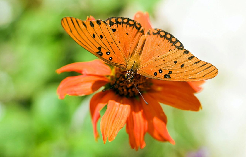 Photo wallpaper flower, nature, Wallpaper, butterfly, wings, petals