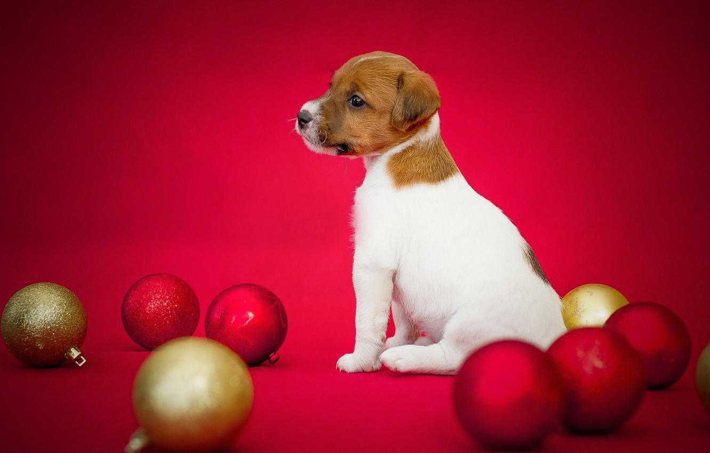 Photo wallpaper toys, dog, puppy