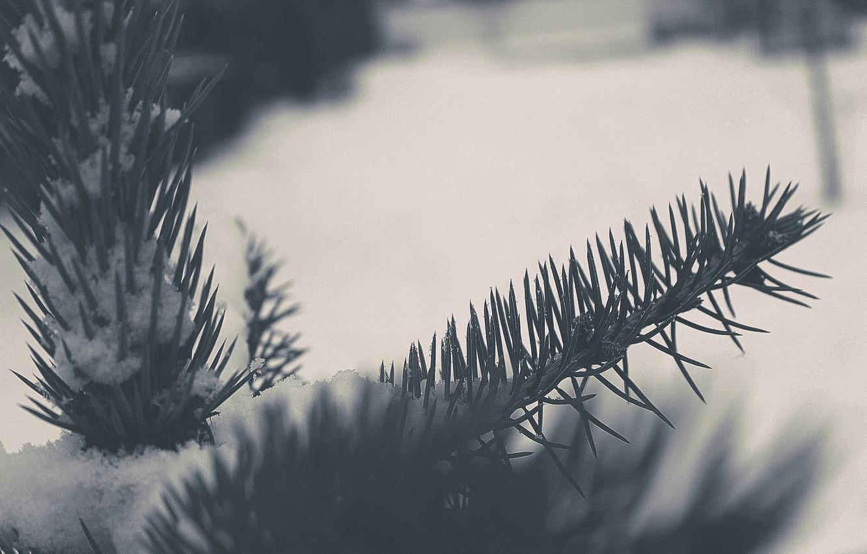 Photo wallpaper winter, macro, snow, tree, tree