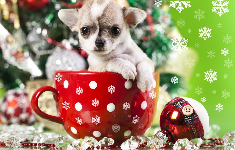 Photo wallpaper decoration, snowflakes, toy, dog, ball, mug, puppy, doggie, Chihuahua
