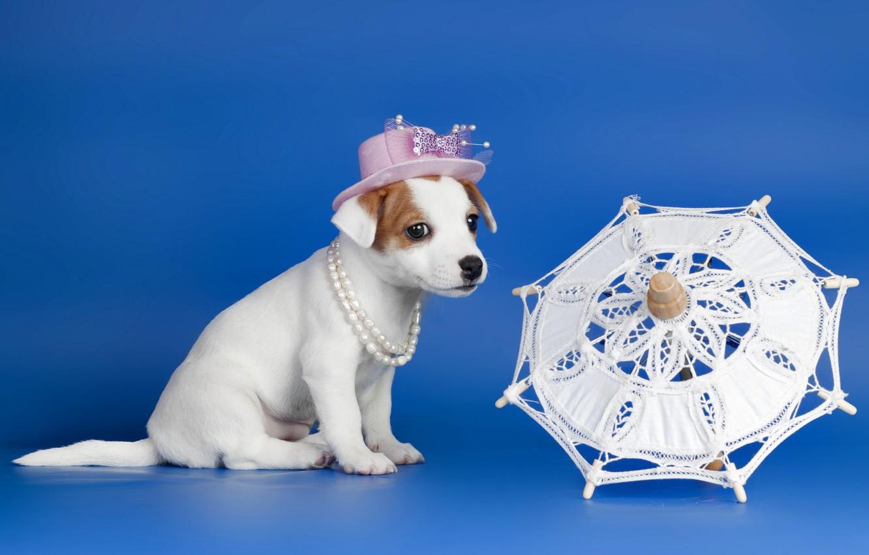 Photo wallpaper dog, umbrella, puppy
