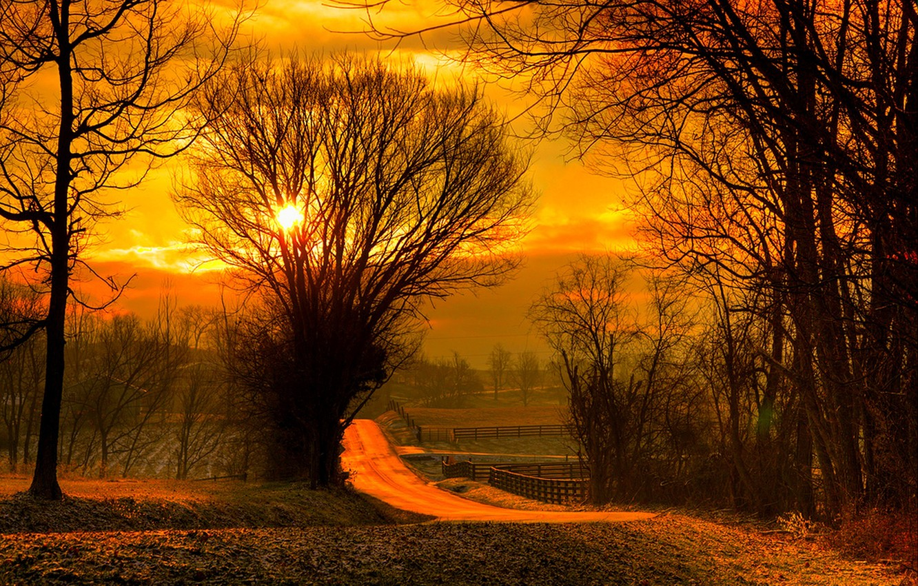 Photo wallpaper road, field, autumn, forest, the sky, leaves, the sun, trees, sunset, nature, sunrise, colors, colorful, …