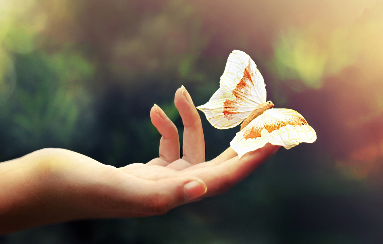 Photo wallpaper macro, light, ease, butterfly, color, hand, fingers, palm