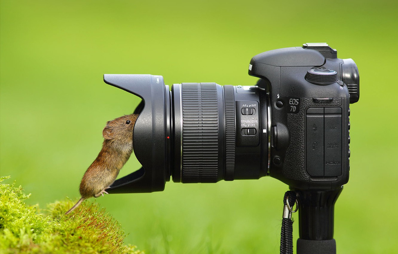 Photo wallpaper mouse, the camera, lens, curiosity