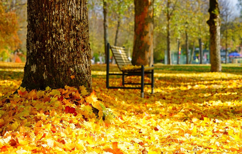 Wallpaper Autumn Park Bench Images For Desktop Section