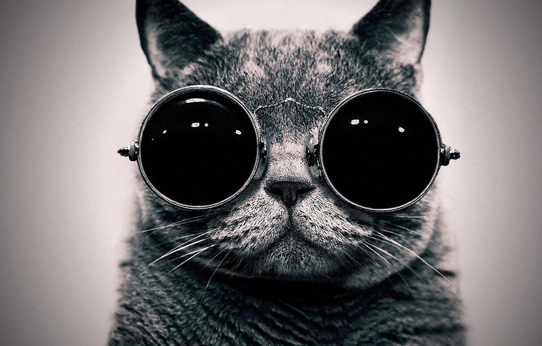 Photo wallpaper cat, portrait, glasses