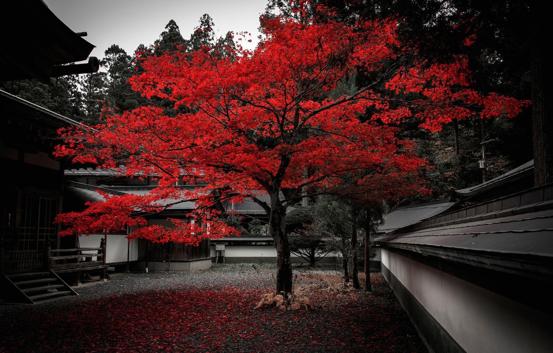 Photo wallpaper autumn, leaves, house, tree, Japan, yard, the crimson