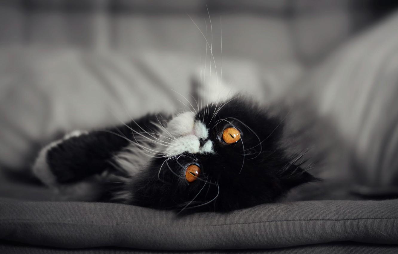 Photo wallpaper cat, cat, muzzle, eyes. look