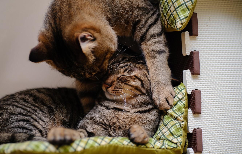 Photo wallpaper cats, cats, play, sleep