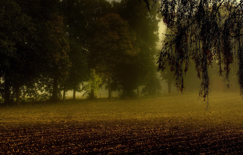 Photo wallpaper field, autumn, trees, fog, branch, arable land