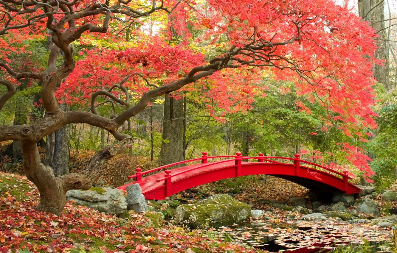 Image result for japanese bridge in fall