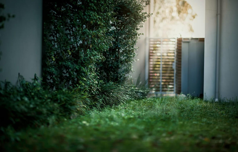 Photo wallpaper grass, light, glare, the door, yard, the bushes, bokeh