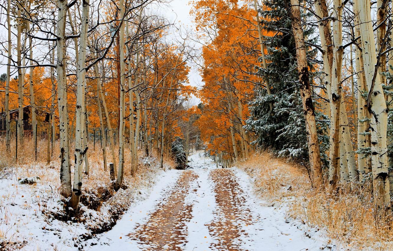 Photo wallpaper road, autumn, snow, trees