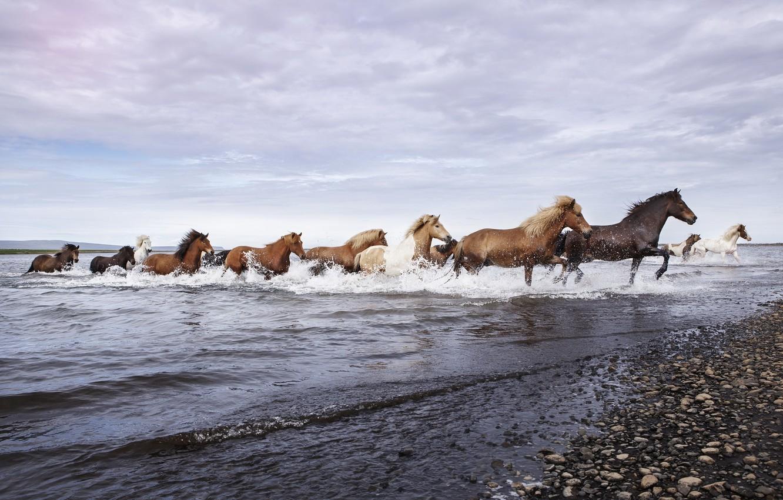 Photo wallpaper nature, river, horses