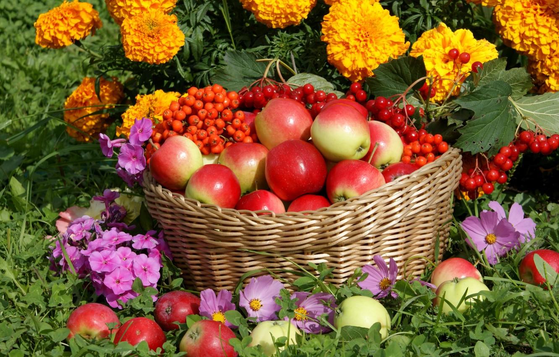 Photo wallpaper flowers, basket, apples, harvest, Rowan, Kalina, kosmeya, Phlox, marigolds