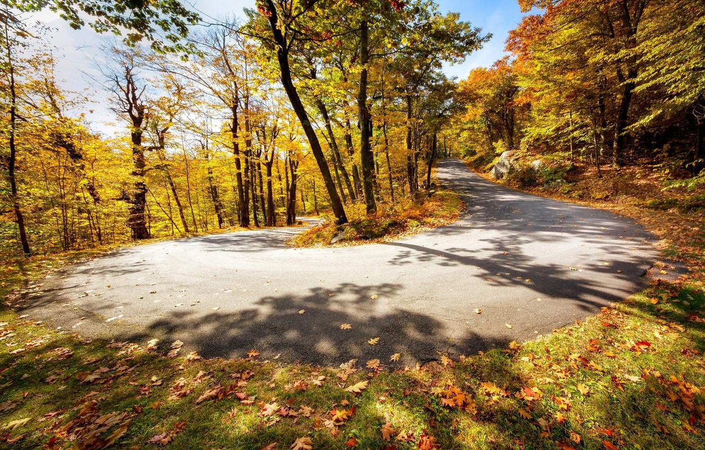 Photo wallpaper road, autumn, turn
