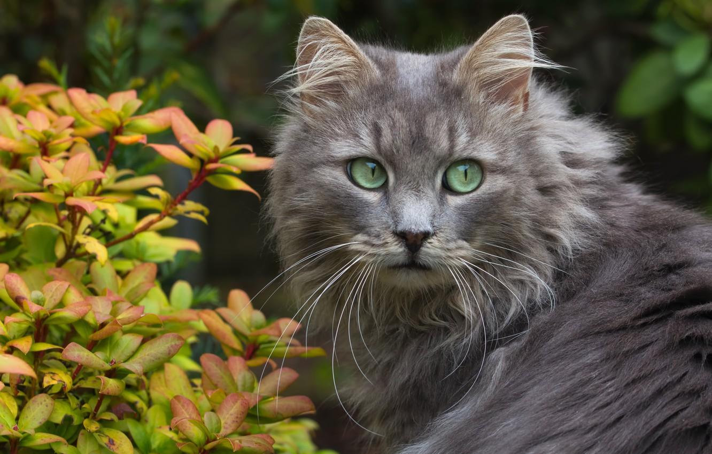Photo wallpaper cat, mustache, look, leaves