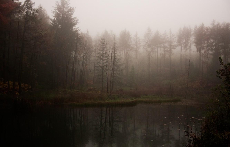 Photo wallpaper forest, fog, lake, gloomy, atmospheric