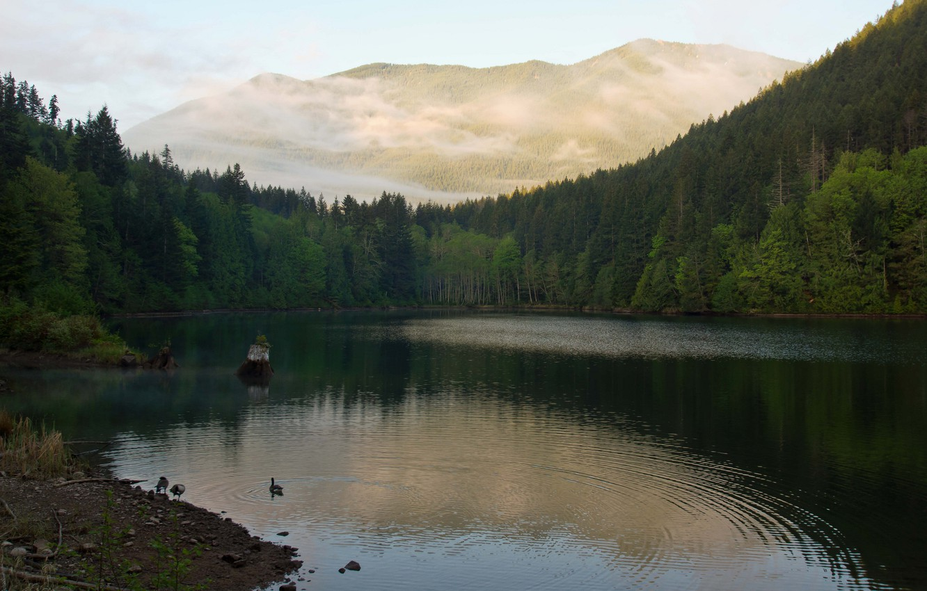 Photo wallpaper forest, lake, mountain, duck, morning