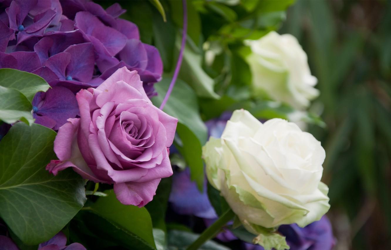 Photo wallpaper leaves, Bush, roses, white, lilac, hydrangea