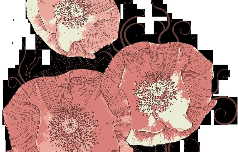 Photo wallpaper flowers, Maki, red