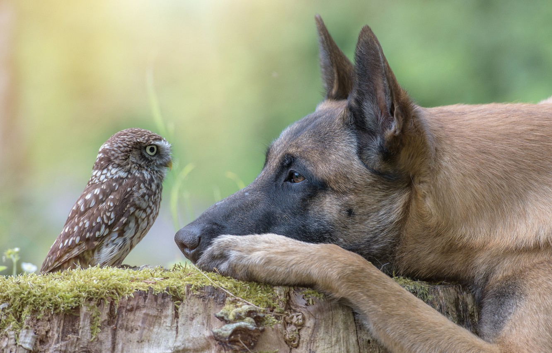 Photo wallpaper animal, owl, bird, stump, dog, head, profile, dog