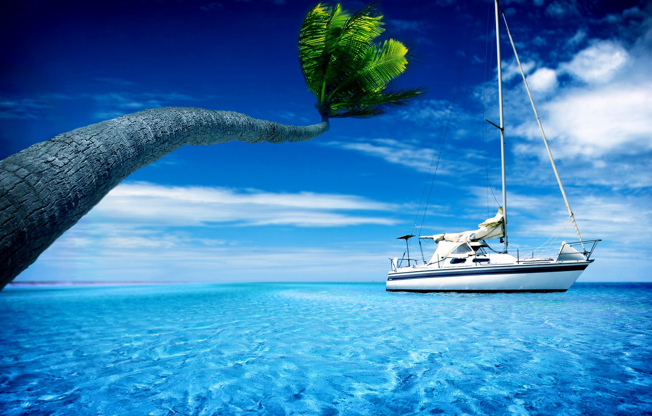 Photo wallpaper summer, the sky, water, Palma, palm trees, boat, heat, yachts, boats, yacht, widescreen Wallpaper, the …
