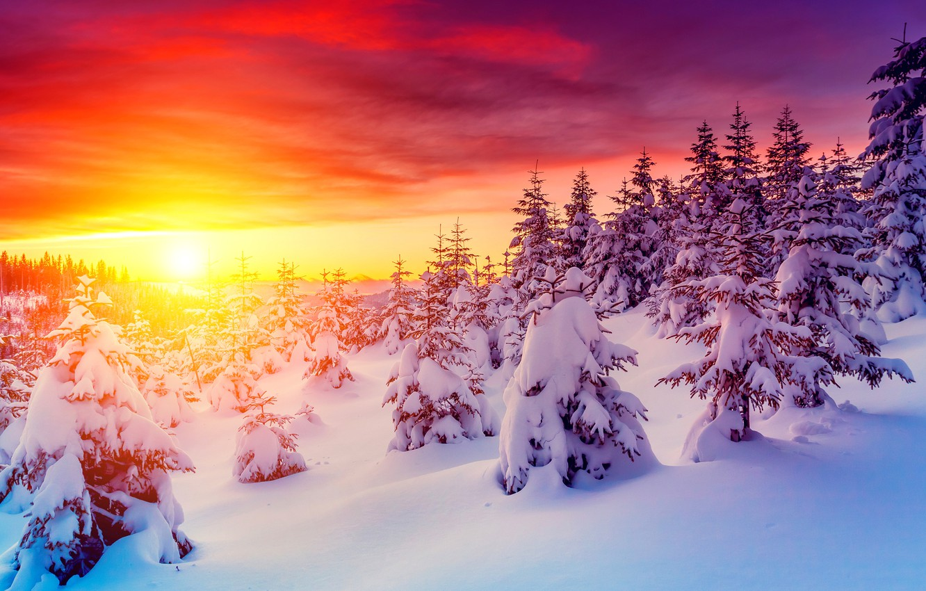 Photo wallpaper sunset, photo, The sky, Nature, Winter, Snow, Dawn, Spruce