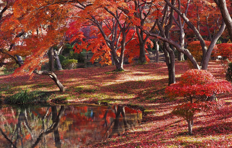 Photo wallpaper autumn, forest, rzero