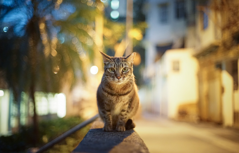 Photo wallpaper cat, look, the city, lights, glare, street, the evening